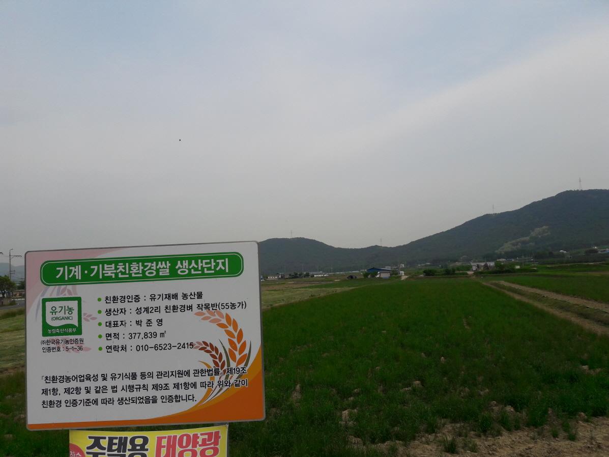 무인헬기 파종 이탈리안라이그라스 대풍작, 고품질 유기농 쌀 생산 밑거름