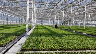 영양군 고추육묘 사업, 고령농가와 소규모농가에 도움