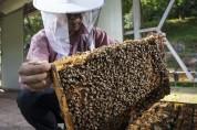 예천군 곤충연구소, 농가 실용화 산업곤충 연구 추진