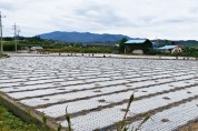영천시, 마늘 산업특구 품질 향상을 위해 농기자재 지원
