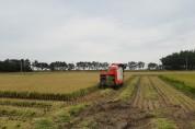 울진군, 고품질 쌀 생산을 위한 벼 적기 수확 당부