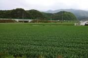 영천 한방·마늘 산업특구지역, 개인 간 농지 임대차 가능