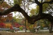 안동 도산서원, 세계유산 등재 고유·표지석 제막식 개최
