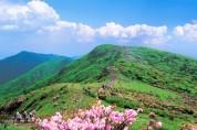 영주시, 국립산림치유원 '다스림'에 복원 철쭉 120주 기증