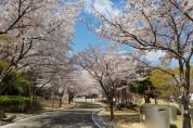 봄이 오나봄! 봄에는 포항 여기를 가봄직!
