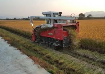 고품질 생산 Rice! 적기수확으로 Nice!